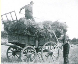 Collecting sheaves of corn with a horse drawn cart