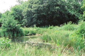 Pond in Brookland Wood