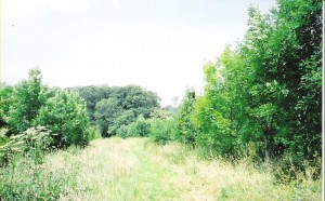 Brookland Wood