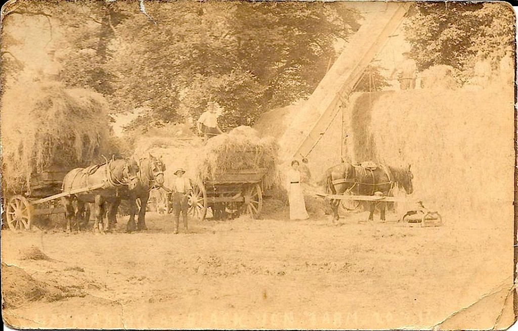 Haymaking at Blackven Farm 20/07/1916
